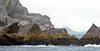 MMSL-2016.8.4#756. Sea Lions on a rocky point  in the Gulf of Alaska out of Seward.
