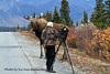 M-2013.9.17#105.346. Eight mile, Denali Park Alaska. Photo by Vic Van Ballenberghe.