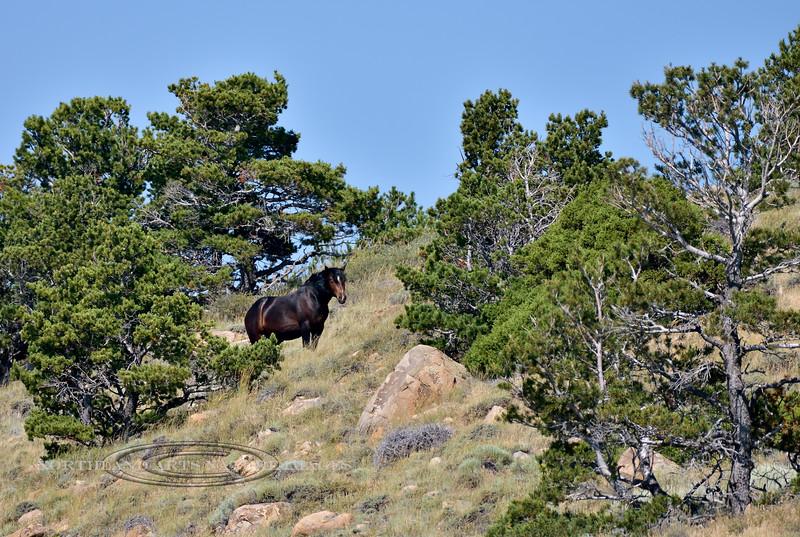 H-2018.7.7#2288. Wild Horse. Wyoming.