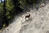 SBHRM-2015.5.19#998.3. Banff Nat. Park. Alberta Canada.