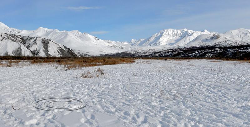 C-2008.10.4#087. Barren Ground Caribou trails. After they have passed. Alaska Range Alaska.