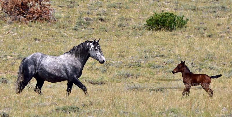 H-2018.7.7#2729. Wild Horse. Wyoming.