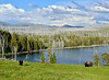 BP-2018.7.4#5967.2. Plains Bison Bulls resting along a bay of Yellowstone Lake, Wyoming.
