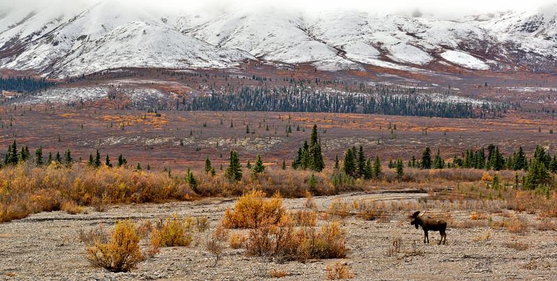M-sf1-2015.9.15-Moose, Alaska. Alaska Range, Alaska.