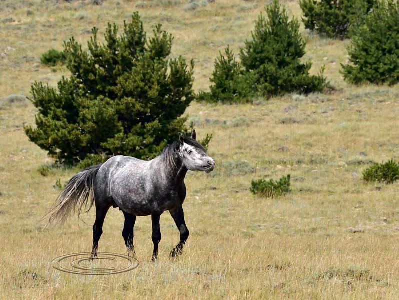 H-2018.7.7#2639. Wild Horse. Wyoming.