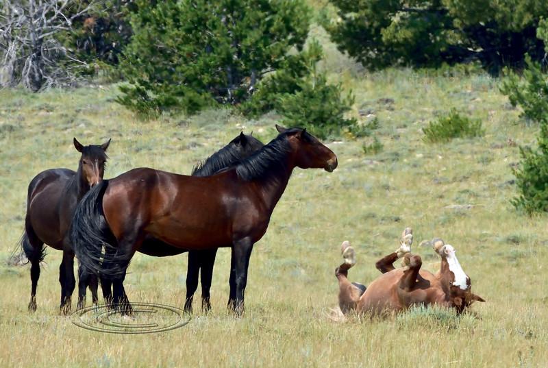 H-2018.7.7#1447. Wild Horse. Wyoming.
