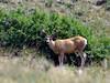 DM-2018.7.7#2920. Mule Deer. Wyoming.