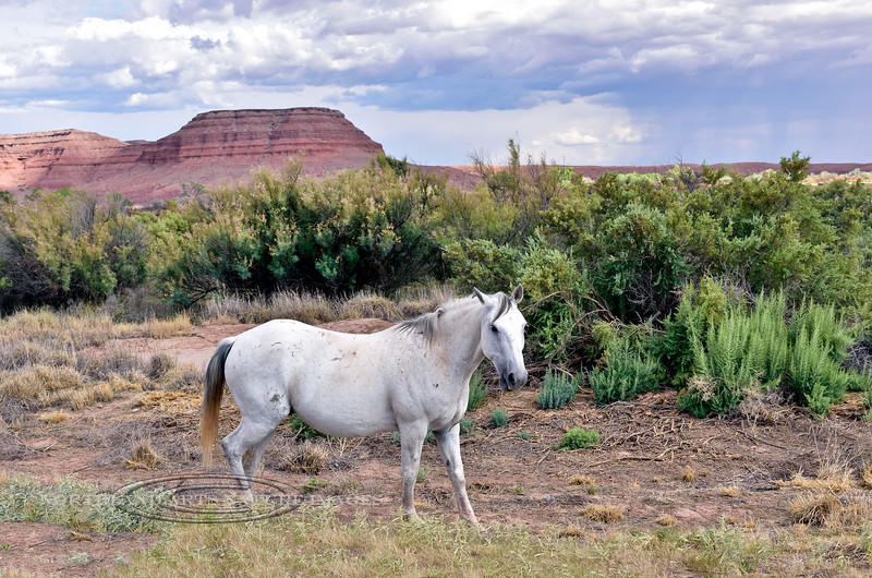 H-2018.7.9#5891. Wild Horse, Apache County, Arizona.