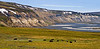 A family group of Muskox near the Sagavanirktuk River,North Slope,Alaska. 612.106. 1x2 ratio format. A 2x3 ratio format of this image is available in the Muskox section of this gallery.