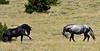 H-2018.7.7#2750. Wild Horse. Wyoming.