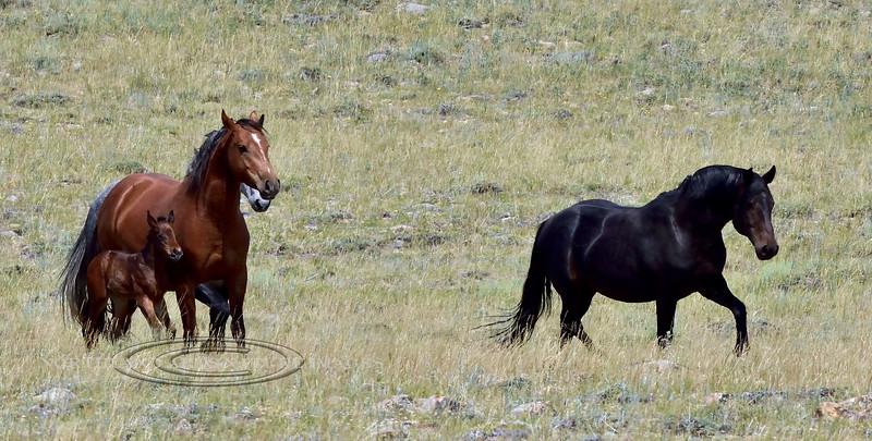 H-2018.7.7#2730. Wild Horse. Wyoming.