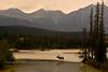 E-2017.9.9#712. Elk, Rocky Mountain. Alberta Canada.