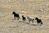 H-2018.7.7#2191. Wild Horse. Wyoming.