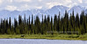 M-2015.6.23#083. A small bull moose is cruising the lake shore browsing on forbs. Talkeetna Mountains, Alaska.