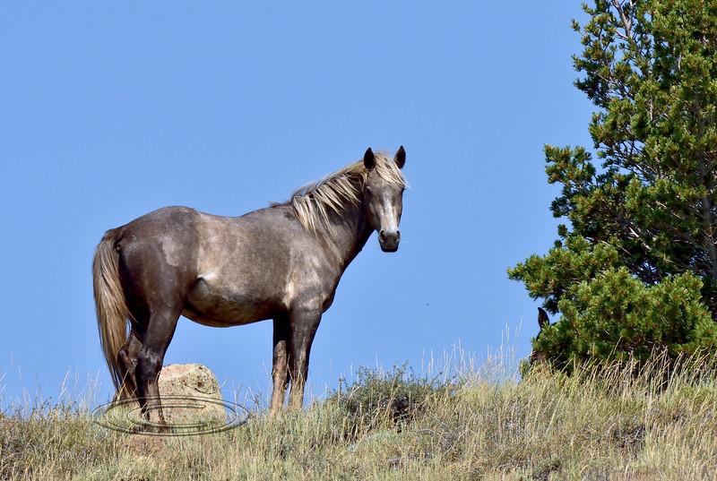 H-2018.7.7#2405. Wild Horse. Wyoming.