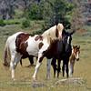415-2018.7.7#2611. Wild Horses. Wyoming.