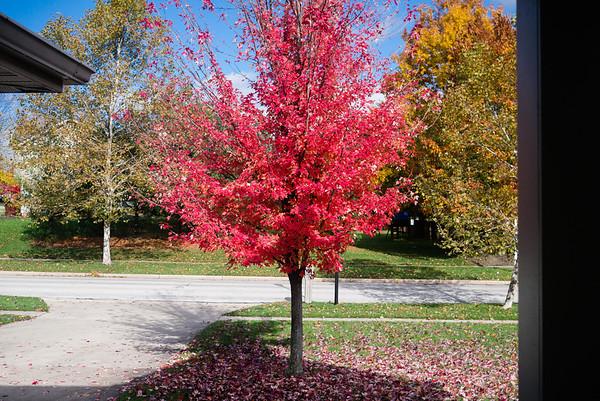 Last of Fall Colors 11/3/2013