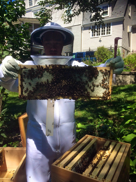 East side of b4. Lots of capped honey in upper part of frame and on the sides.