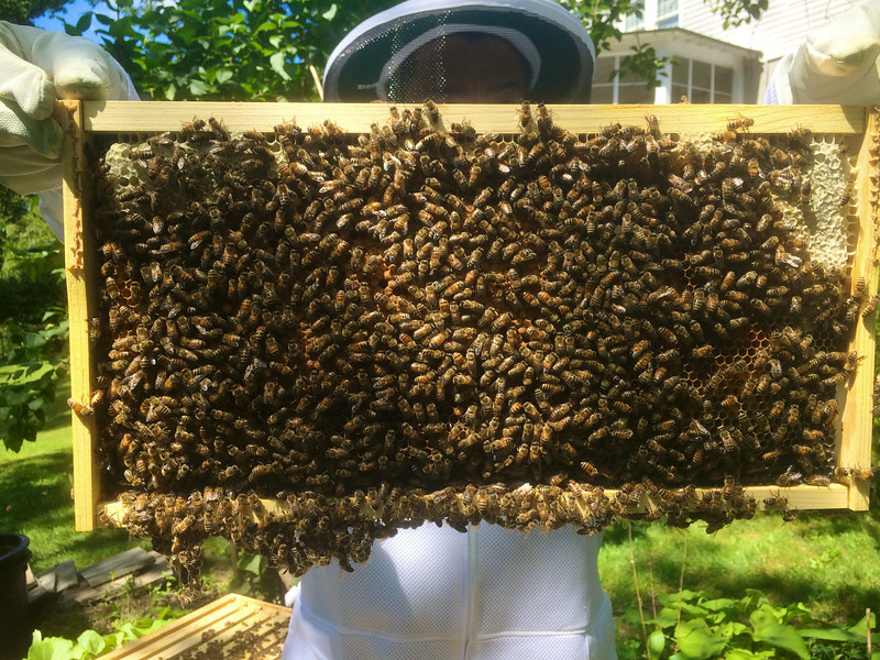 a2  east side faces inward, and it is fully covered by working bees. Some structure hanging off the bottom.