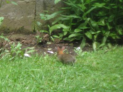 Latest Bunny