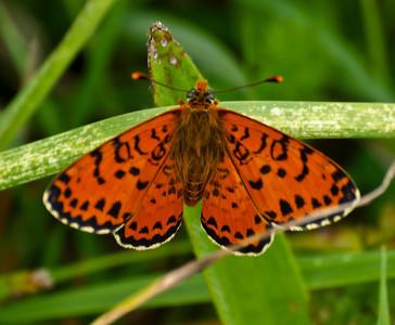 Latest Butterflies