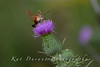 1 This I believe is a Hummingbird Moth....So pretty!
