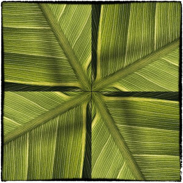 Variation 6 pickerelweed leaf