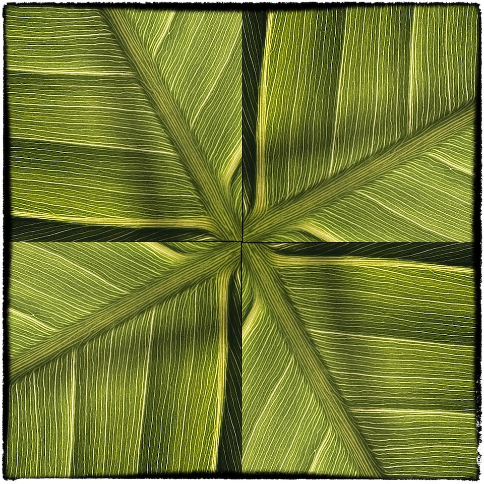 Variation 6 pickerelweed leaf