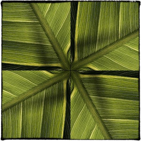Variation 4 pickerelweed leaf