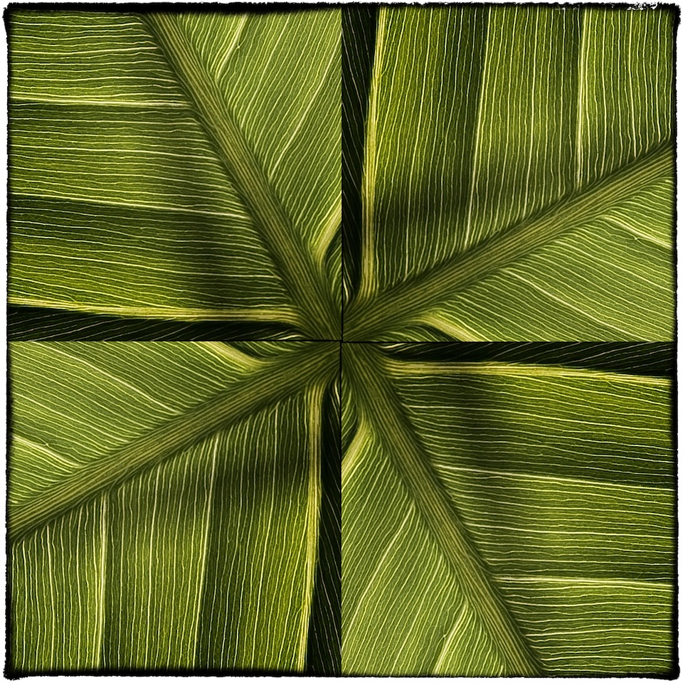 Variation 4 pickerelweed leaf