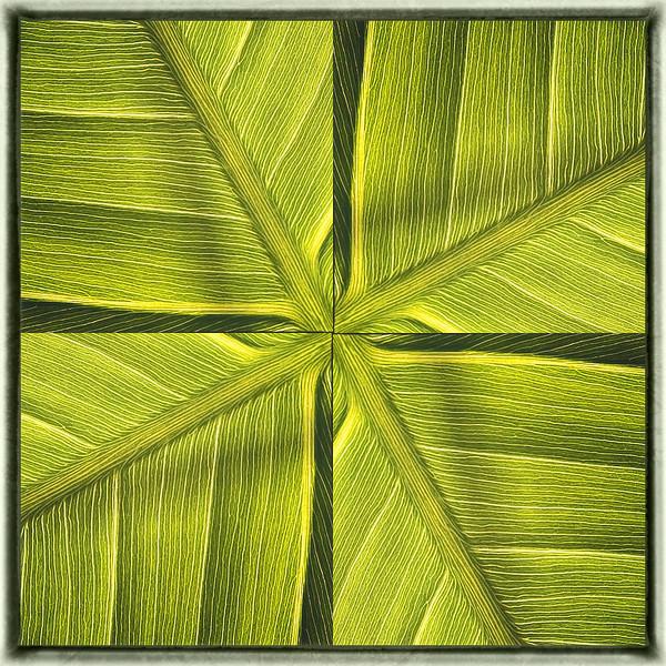 Variation 1 pickerelweed leaf