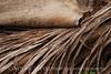 Dead palm leaves, Green Cay FL (9)