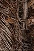 Dead palm leaves, Green Cay FL (10)