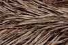 Dead palm leaves, Green Cay FL (11)