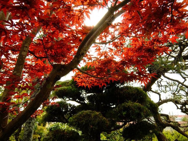赤く染まった春。