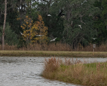 A low country pond
