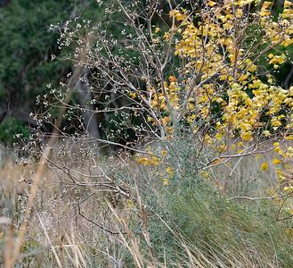 The invasive Tallow Tree. Likes it feet wet and is often found near the marsh.