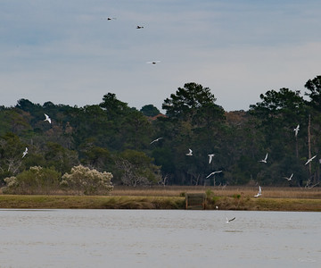 Terns were very busy fishing on the far side of Middle Pond.