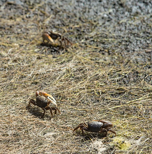 Fiddler Crabs scurry along the bank as we walk by them.