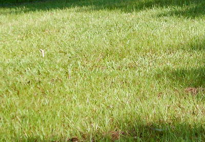 Non-venomous Chicken Snake, aka Yellow Rat Snake, on the far left side of the photo