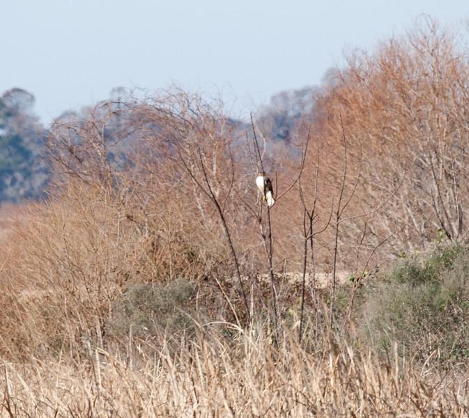 Bird of Prey in the distance