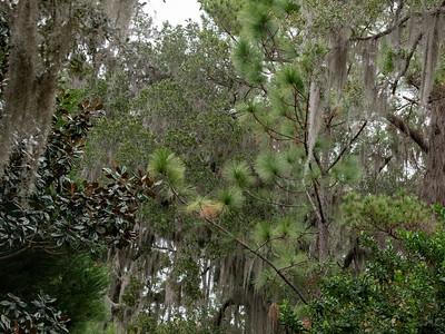 A wondergul mix of native trees.
