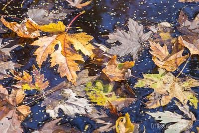 Leaf Chaos