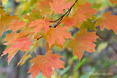 Autumn Pretties