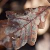 Leaf Brown dead cells macro rot