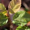 Foliage Macro