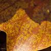 Leaf Macro Cells Yellow