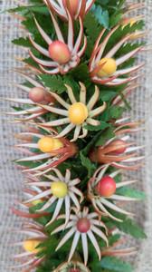 Mangrove, ohai aliʻi and palapalai