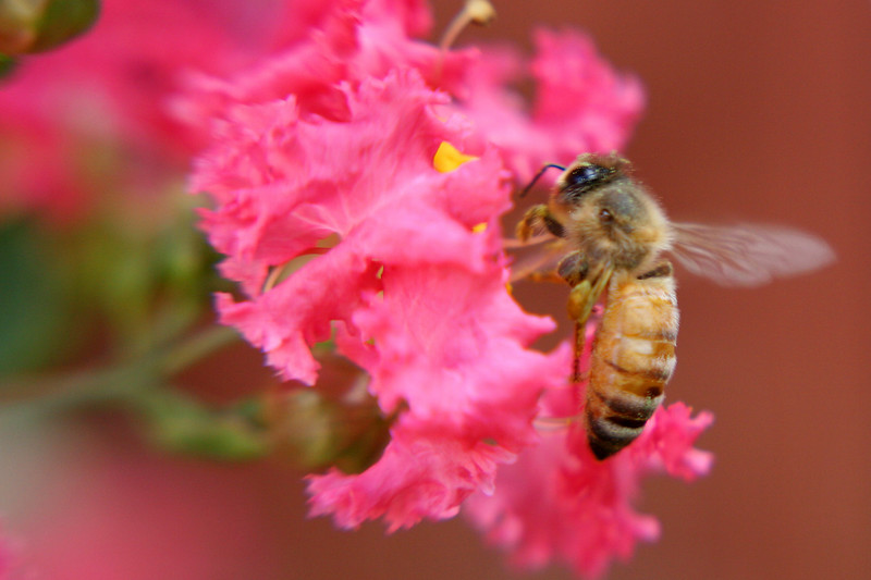 Bees move way too fast and you have to get WAY too close to take pics with this lensbaby! :)