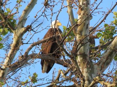Leo Eagles 05112012
